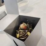 Cake in a Box
