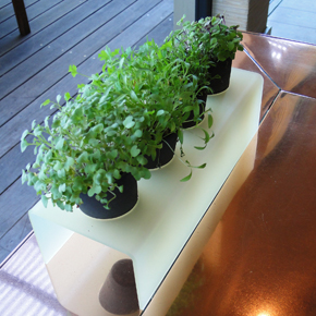 Microgreens in Black Clay Pots